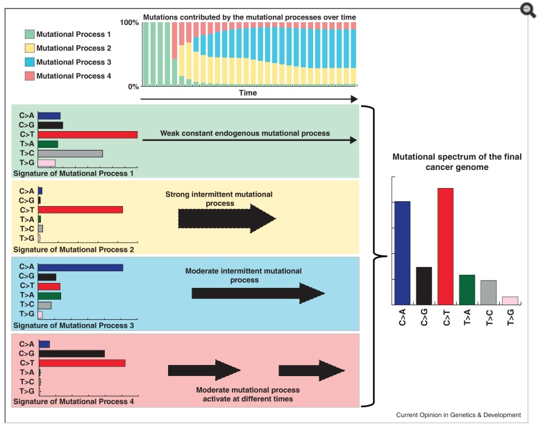 Mutational signatures of a cancer by the operation of several mutational processes over time.